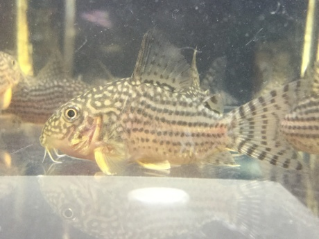 210401 熱帯魚 めだか 金魚 水草_f0189122_12203452.jpeg
