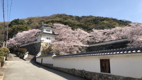 春爛漫の龍野_b0099226_17390967.jpg