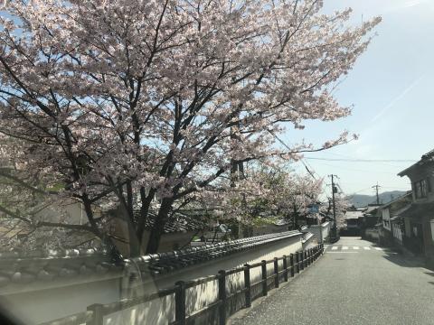 春爛漫の龍野_b0099226_17391918.jpg