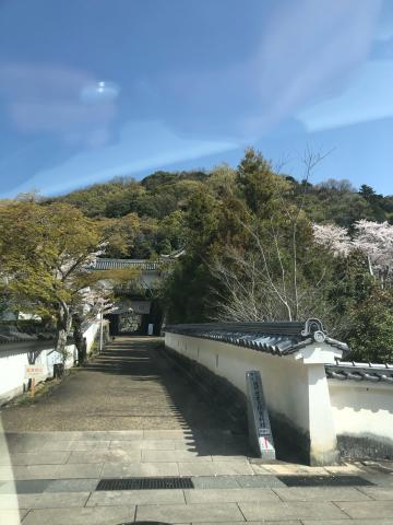 春爛漫の龍野_b0099226_17392332.jpg