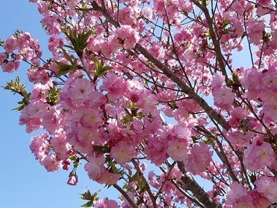 近場でお花見 その2_f0129726_18253032.jpg