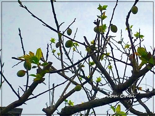 今春は例年にない暖かさです_c0079828_22312662.jpg