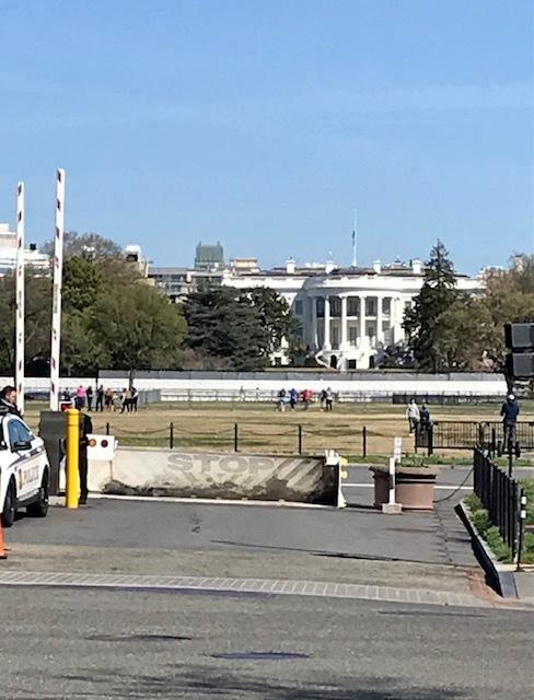 2021 ワシントンD.C. 桜便り_d0269832_21025523.jpeg