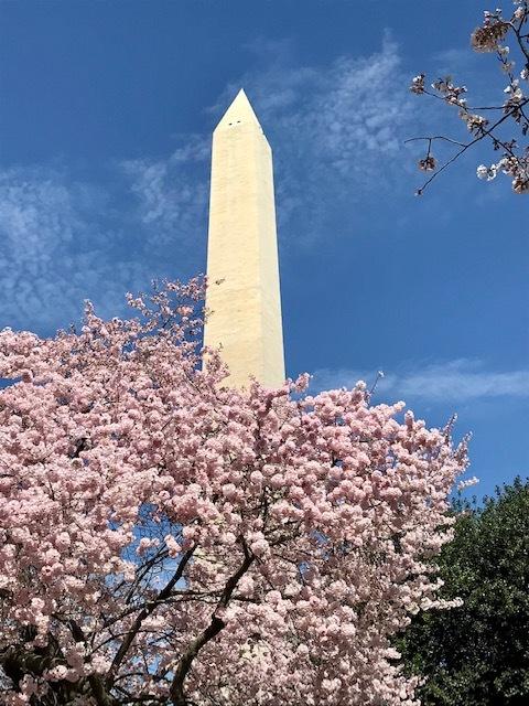 2021 ワシントンD.C. 桜便り_d0269832_21025569.jpeg