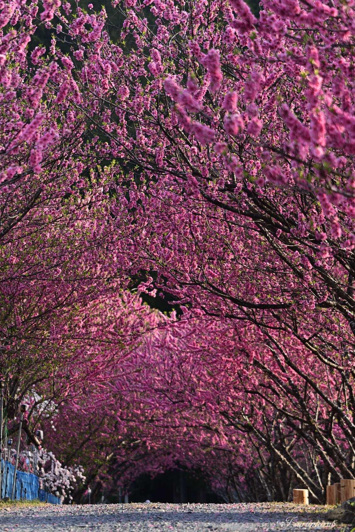 花桃の里へ_e0358534_19424917.jpg