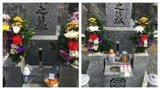 バレエの舞台撮影で 墓参りと花見 マイナンバーカード_a0084343_08055430.jpeg