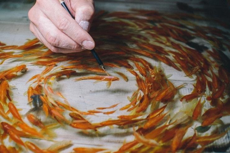き、き、金魚が...!!!_d0378149_12072166.jpg