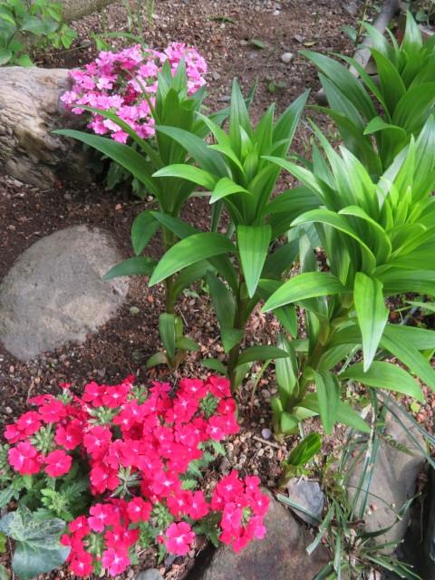 春の花と食を楽しむ_f0329849_12501840.jpg