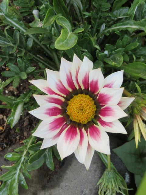 春の花と食を楽しむ_f0329849_12585578.jpg