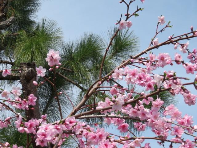 春の花と食を楽しむ_f0329849_13142597.jpg