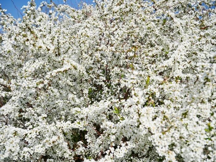 丘陵の春  2021-04-13 00:00_b0093754_22494129.jpg
