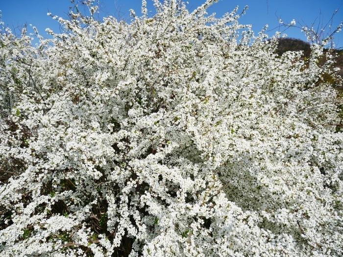 丘陵の春  2021-04-13 00:00_b0093754_22495191.jpg