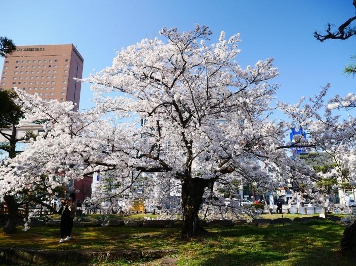 和歌山城公園にて  2021-04-01 00:00_b0093754_23325396.jpg