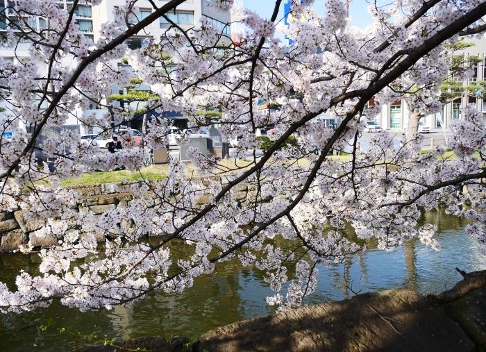 和歌山城公園にて  2021-04-01 00:00_b0093754_23330479.jpg