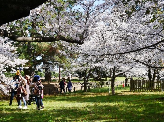 和歌山城公園にて  2021-04-01 00:00_b0093754_23345072.jpg