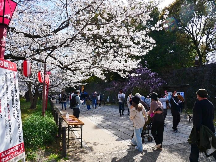 和歌山城公園にて  2021-04-01 00:00_b0093754_23351690.jpg