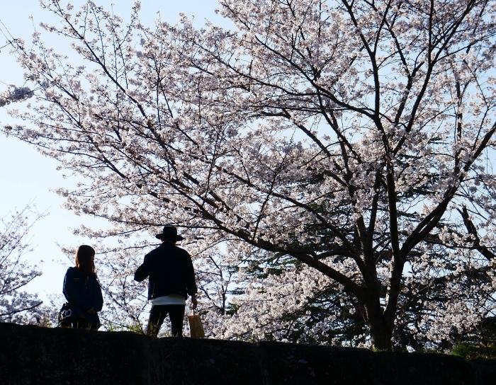 和歌山城公園にて  2021-04-01 00:00_b0093754_23355795.jpg