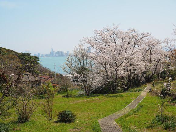 2021/3/31 能古博物館でお花見_f0201157_22001637.jpg