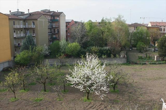 庭の桜、満開になりました。_d0047461_04260114.jpg