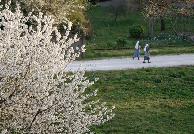 庭の桜、満開になりました。_d0047461_04281819.jpg