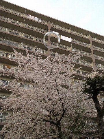 「いわゆる日本」は「なんか、こう……」。_b0141773_15380910.jpg