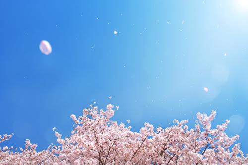 春の訪れ_f0200477_17134359.jpg