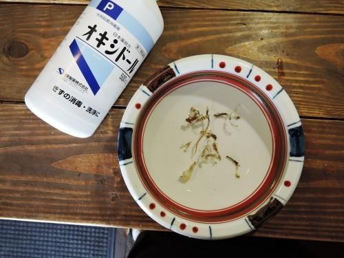 挑戦!トガリネズミ骨格標本・その3(閲覧注意)_d0154687_22401563.jpg