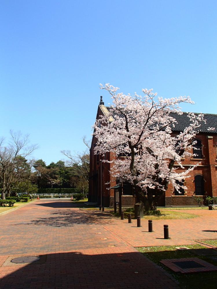 春になりました♡_b0147093_20265393.jpg
