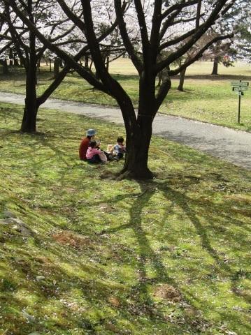 満開の桜で迎える新年度。_f0281398_18282591.jpg