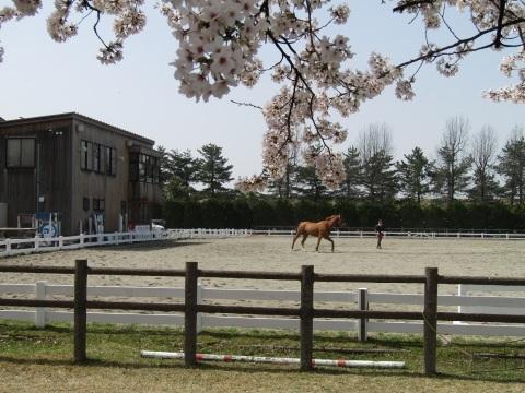 満開の桜で迎える新年度。_f0281398_18294078.jpg