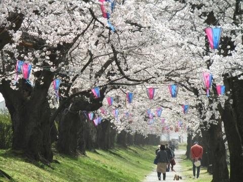 満開の桜で迎える新年度。_f0281398_18301839.jpg