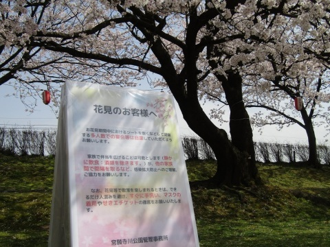 満開の桜で迎える新年度。_f0281398_18315763.jpg