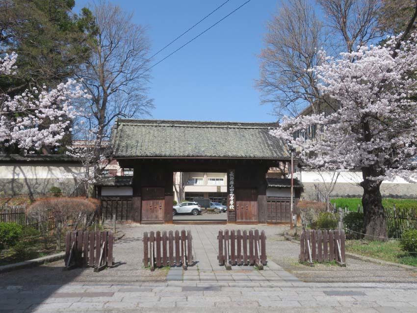 桜情報4_f0014205_14001829.jpg