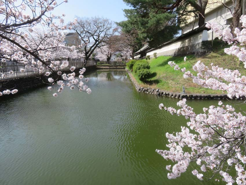 桜情報4_f0014205_14002663.jpg