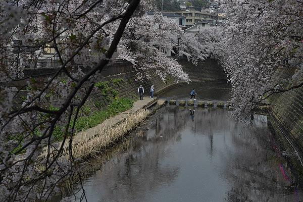 春、きちゃいましたね_a0278809_10045102.jpg