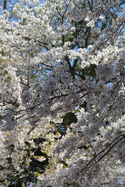 春、きちゃいましたね_a0278809_10052192.jpg