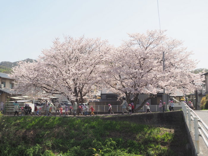 花散歩(石内川と八幡川沿い)_c0116915_00312254.jpg
