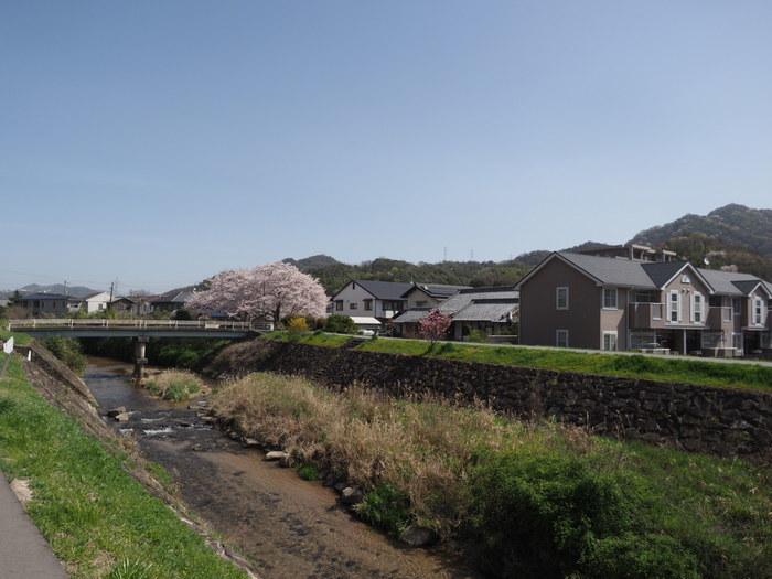 花散歩(石内川と八幡川沿い)_c0116915_00320530.jpg