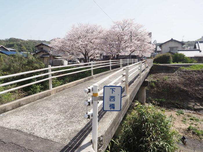 花散歩(石内川と八幡川沿い)_c0116915_00333230.jpg