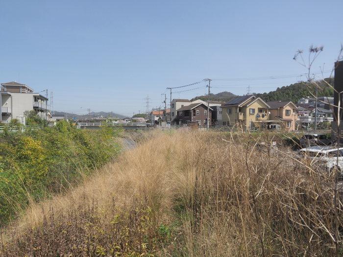 花散歩(石内川と八幡川沿い)_c0116915_00364403.jpg