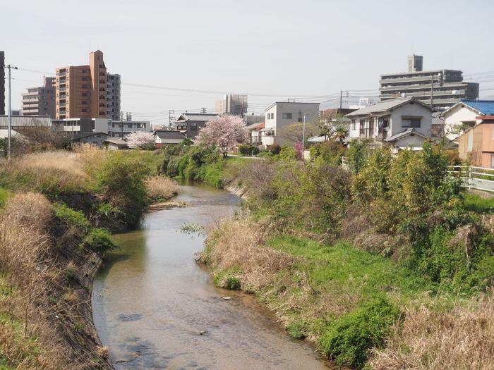 花散歩(石内川と八幡川沿い)_c0116915_00393658.jpg