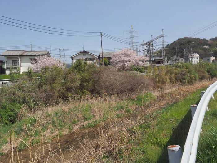 花散歩(石内川と八幡川沿い)_c0116915_00395887.jpg