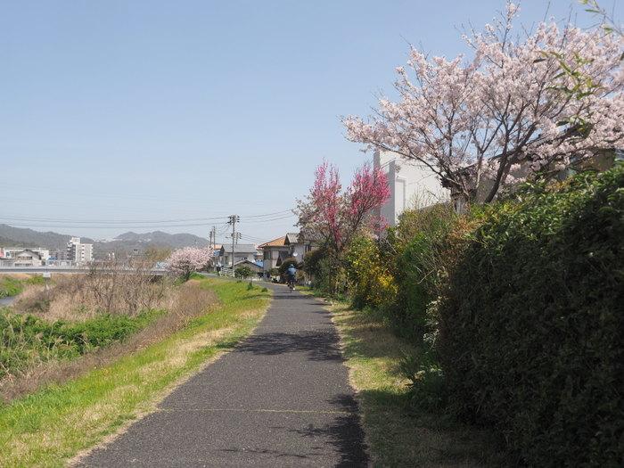 花散歩(石内川と八幡川沿い)_c0116915_00482346.jpg