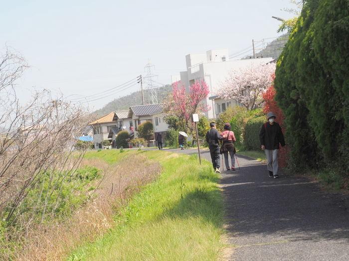 花散歩(石内川と八幡川沿い)_c0116915_00500967.jpg