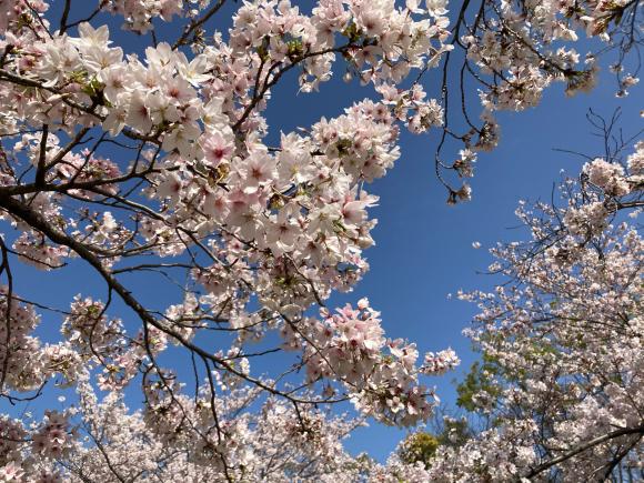 4月になりました。_a0098418_23301164.jpg