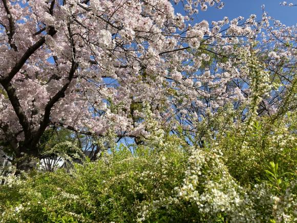 4月になりました。_a0098418_23301891.jpg