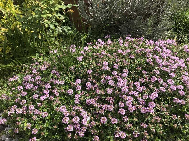4月の庭とサロンから_d0085018_10290567.jpeg