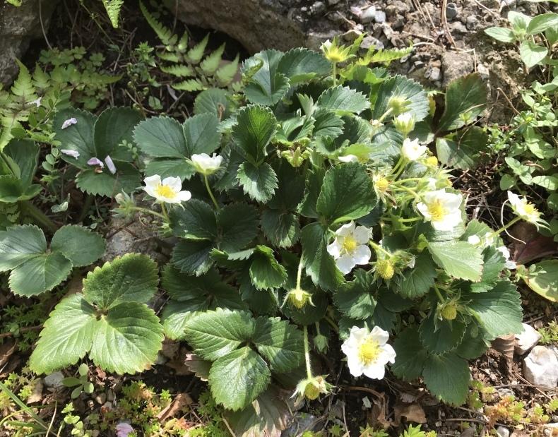 4月の庭とサロンから_d0085018_10391573.jpeg
