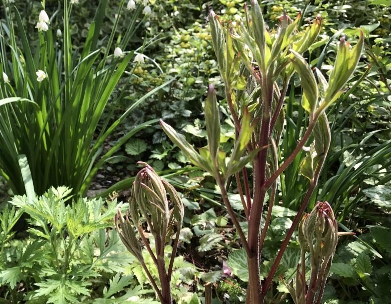 4月の庭とサロンから_d0085018_11130936.jpeg