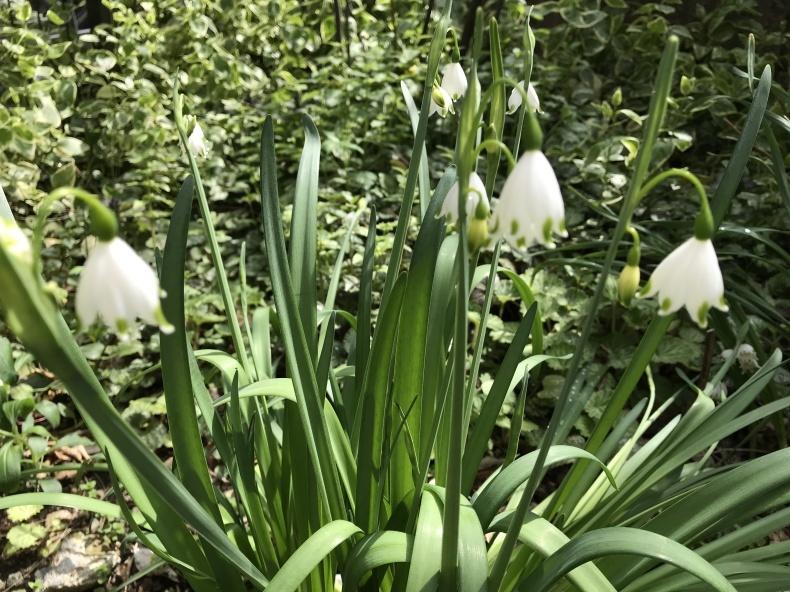 4月の庭とサロンから_d0085018_11494329.jpeg